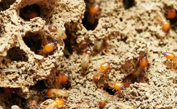 termites-3367350_960_720